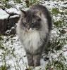Pencost : Faites confiances à nos éleveurs de chats de race pour vos achats